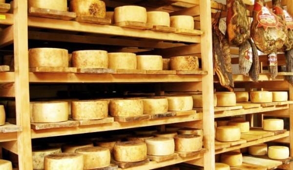Kolan-Cheese-dairy