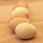 A Matter of Eggs