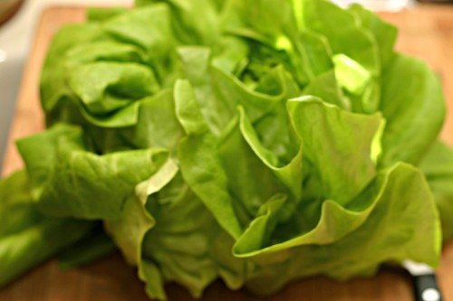 butter lettuce 2
