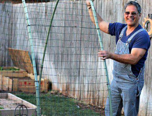How to Build a Winter Squash Arch