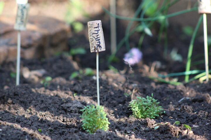 Plant marker wine cork