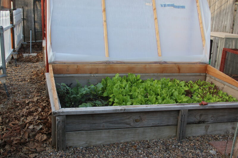 How to Build a Cold Frame Garden Bed - Dishin & Dishes